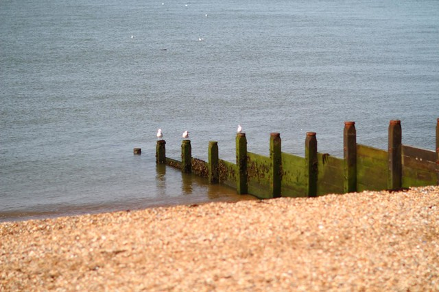 a beach and perch to themselves: Kentish seaside summer