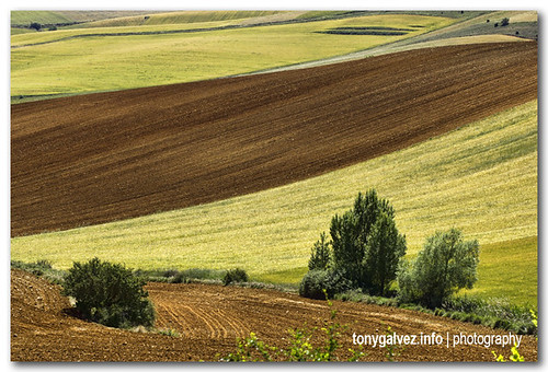 fields of Castilla