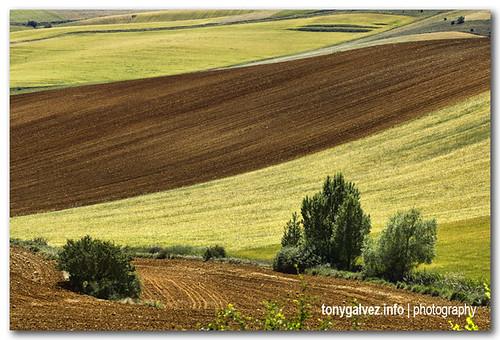 fields of Castilla