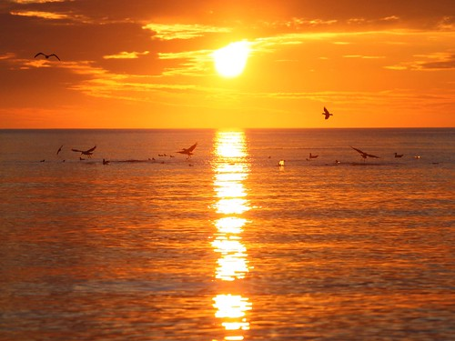 sky birds sunrise queencharlotteislands 2011 fishingcharter