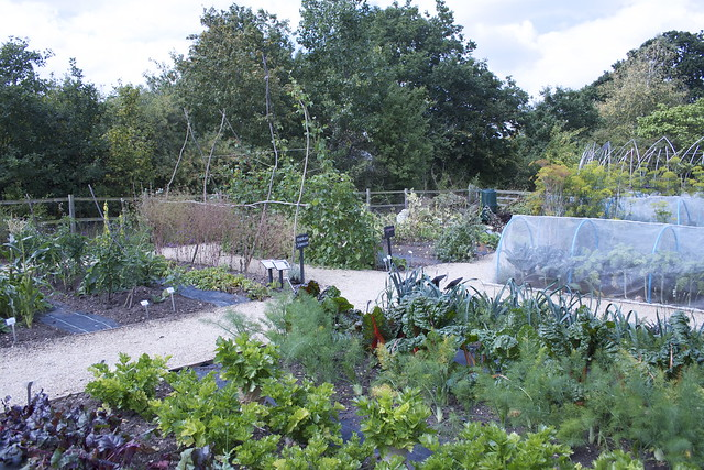 Garden Organic Allotment at Ryton