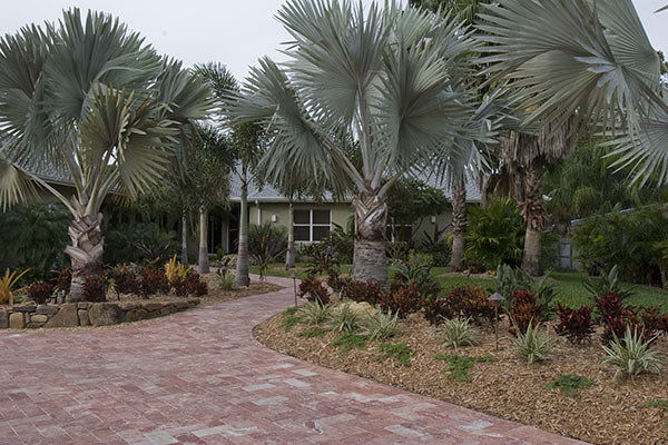 Landscape Design with Palm Trees