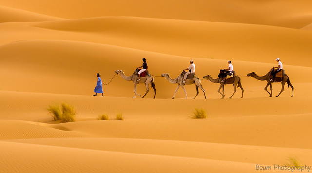 Travelling with Camels II