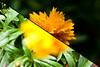 Blume (un)scharf by Eleleleven