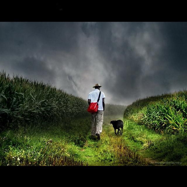 Cornfield Man from Flickr via Wylio