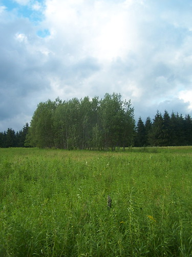 white forest pond long state birch longpond planation andyarthur