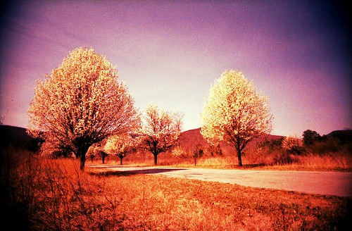 road trees mountain mountains tree film nature 35mm ga georgia spring xpro crossprocessed fuji blossom path crossprocess toycamera valley bloom blossoming vivitar lookoutmountain northgeorgia plasticcamera uws cumberlandplateau bloomage walkercounty pigeonmountain inbloom ultrawideslim northerngeorgia northga t64 rocktown e6toc41 northernga anomyk