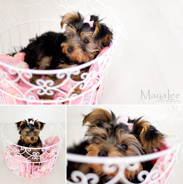 Vilda in the basket