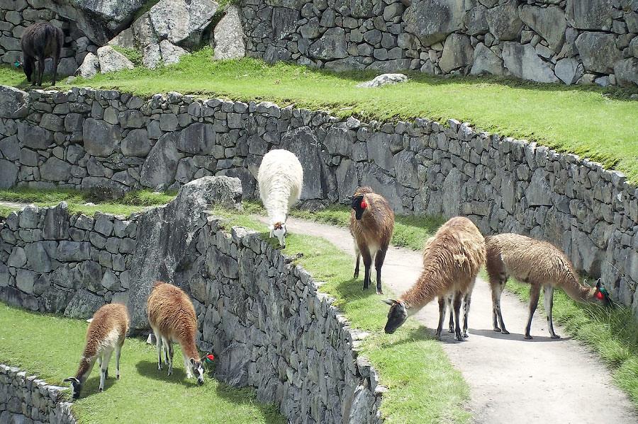 Мачу Пикчу, Перу © Kartzon Dream - авторские путешествия, авторские туры в Индию, тревел фото, тревел видео, фототуры