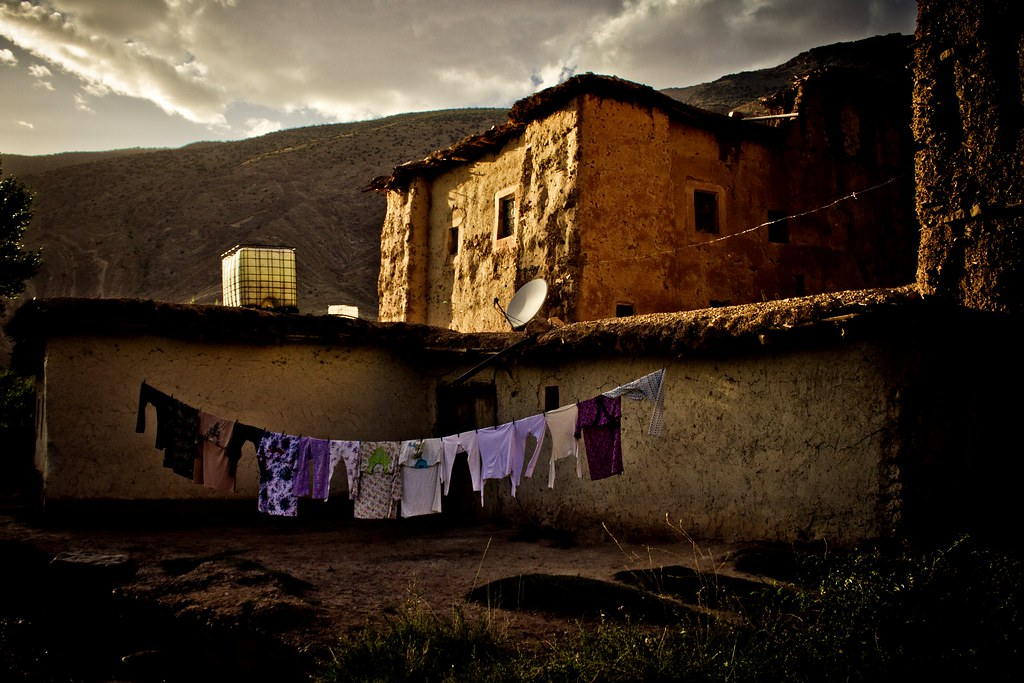 Cafard cosmique 39 s most interesting flickr photos picssr - Cafard de maison ...
