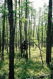 Siberian woods