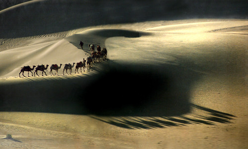 8011 Shadows of camels--The Gobi Desert . China
