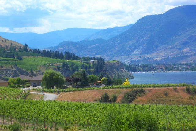 vineyards and lake in the Okanagan by CC user vizpix on Flickr