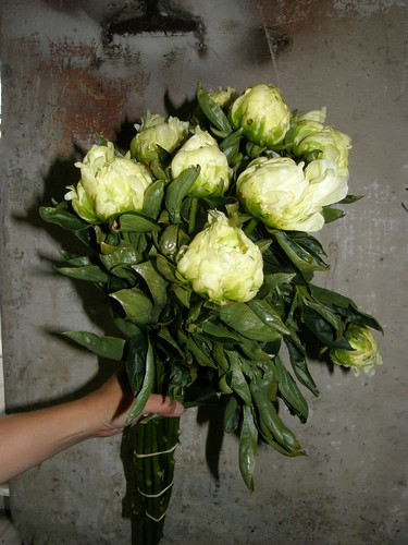 yellow peonies wholesale