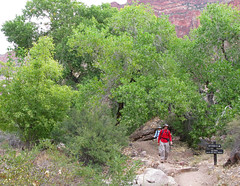 Grand Canyon: Cottonwood Campground 0130