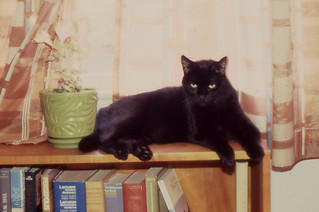 Arlington - Panther on Bookcase (1987)