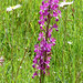 Loose-flowered Orchid (Tom McJannet)