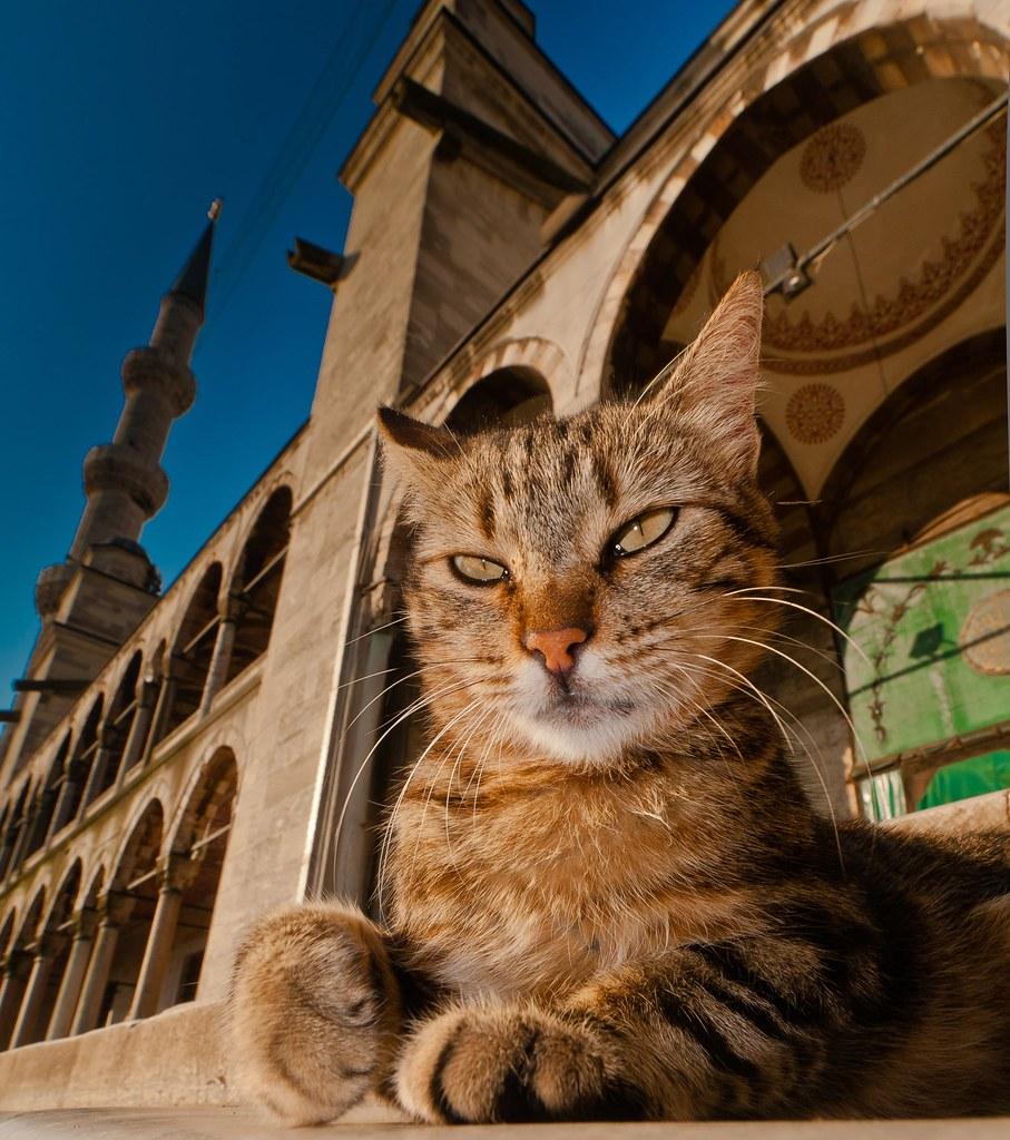 Istanbul mosque cat