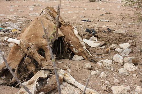 kenya wajir eastafricafoodcrisis