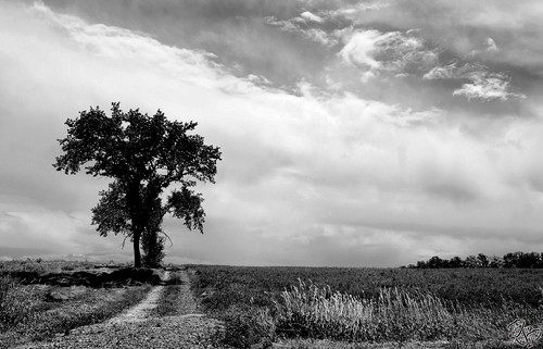 road blackandwhite ontario canada storm tree field clouds landscape noiretblanc sony tracks dslr a500 blackwhitephotos flickraward