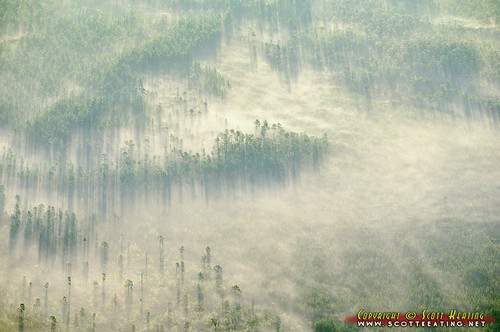 trees usa fog forest sunrise geotagged unitedstates florida aerial deland deleonspringsheights geo:lat=2915343557 geo:lon=8126213551