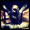 Brass sparrow