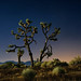 joshua tree, lake los angeles by jody9