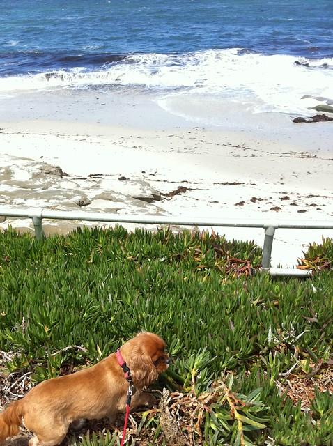 Roxie loves Aloe by the Sea