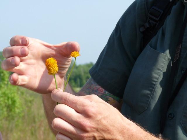 Uli Lorimer, curator of the Native Flora Garden, shows Polygala lutea (orange milkwort) to the team. Photo by Lauren Deutsch.