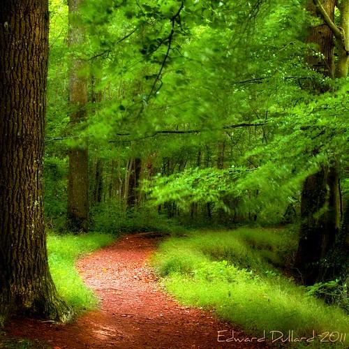 wood trees ireland irish painterly leaves forest landscape eire impressionism magical photoart emeraldisle enchanted irlanda ierland cillchainnigh jenkinstownwood edwarddullardphotographykilkennyireland