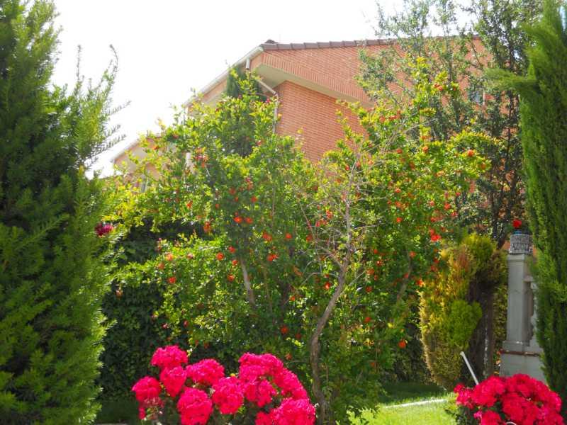 Jardin florido
