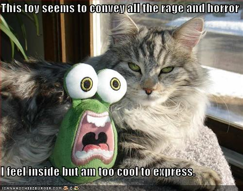 funny-pictures-calm-cat-crazy-toy