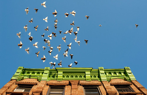 Building and Pigeons: Bushwick Brooklyn
