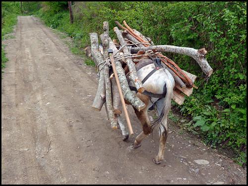wood animal forest work harvest trail macedonia coupe chemin forêt mule bois macédoine workinganimal labeur mk2011