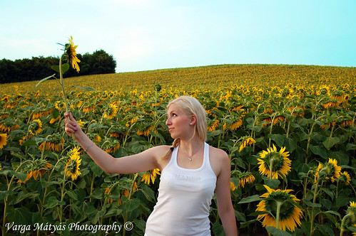 summer woman girl field yellow d50 nikon sommer feld sunflower blondehair patri napraforgó nyár sárga mező szőke lány