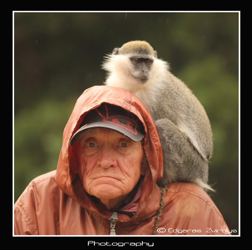 Old man and the monkey