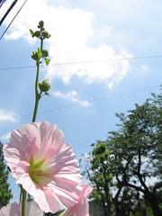夏の花だよね? by Noël Café