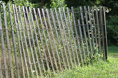 outdoor structure(0.0), chain-link fencing(0.0), home fencing(1.0), shrub(1.0), picket fence(1.0),