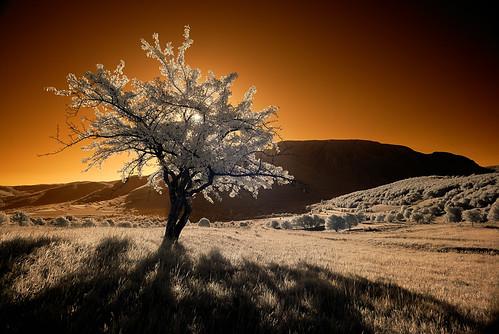 infrared sunrise