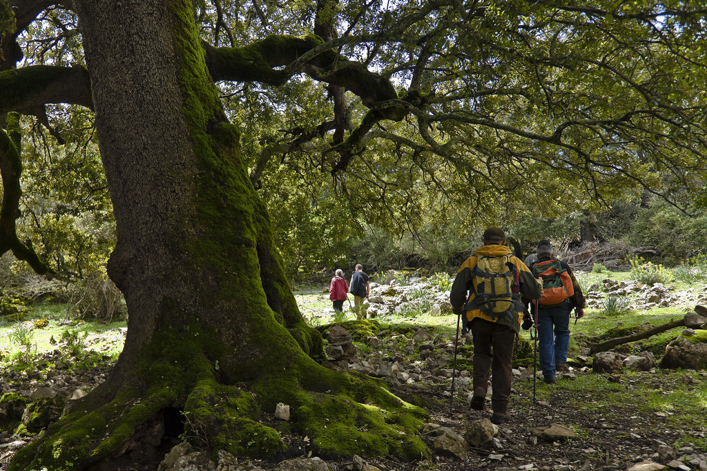 Foresta di Sas Baddes (Fonte: picssr.com)