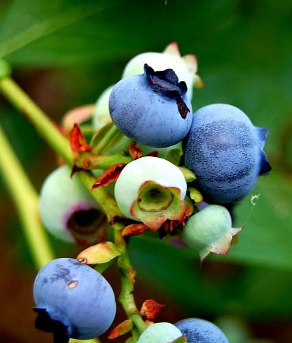 Finally ripening