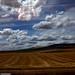 Fields from a train by Nachett