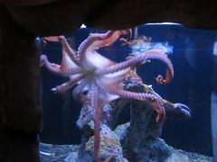 deep sea fish(0.0), octopus(1.0), marine biology(1.0), invertebrate(1.0), marine invertebrates(1.0),