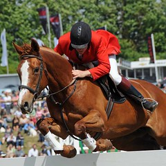 western riding(0.0), racing(0.0), western pleasure(0.0), animal training(0.0), endurance riding(0.0), physical exercise(0.0), animal sports(1.0), equestrianism(1.0), english riding(1.0), modern pentathlon(1.0), eventing(1.0), stallion(1.0), show jumping(1.0), hunt seat(1.0), equestrian sport(1.0), rein(1.0), sports(1.0), outdoor recreation(1.0), equitation(1.0), horse(1.0), horse trainer(1.0), horse harness(1.0), jockey(1.0),