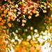 Orange Days by moaan