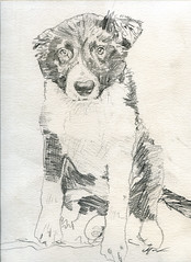 Drawing of Puppy Indy
