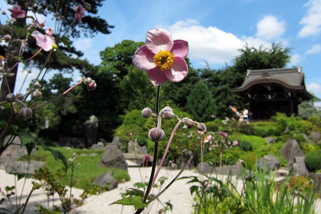 Kew Gardens, July 2011