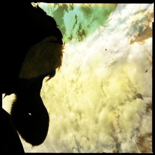 hipstamatic salvador84lens 365the2011edition blankonoirfilm