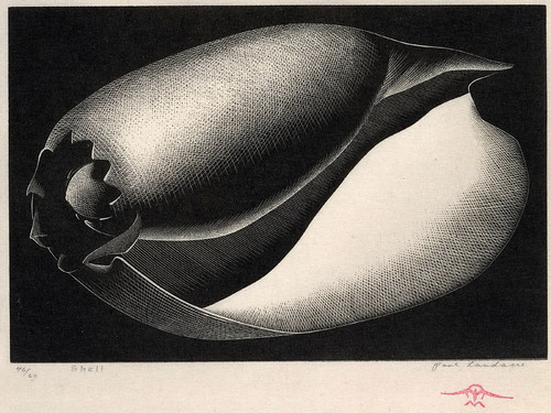 """Shell"" - Paul Landacre - Wood Engraving - 1935"