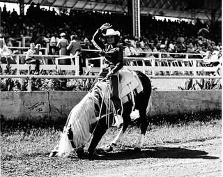 Woman rides show horse (MSA)